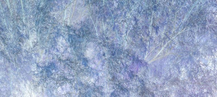 Untitled (10-358), 2008, pigment print