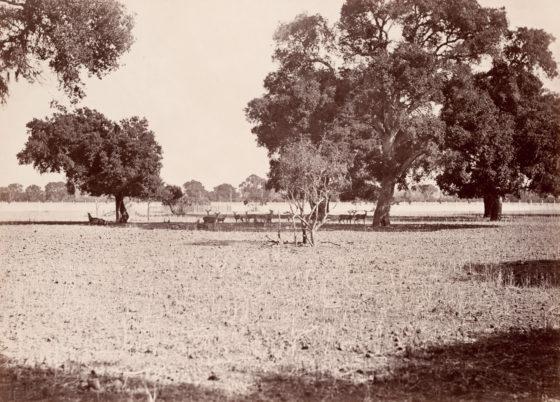 The Deer Park, Menlo Park, California, ca. 1874, mammoth-plate albumen print