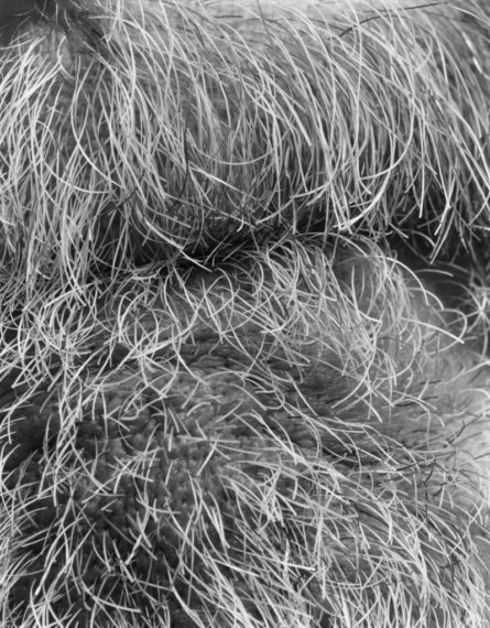 Self (11), Brookline, 2008, gelatin-silver contact print