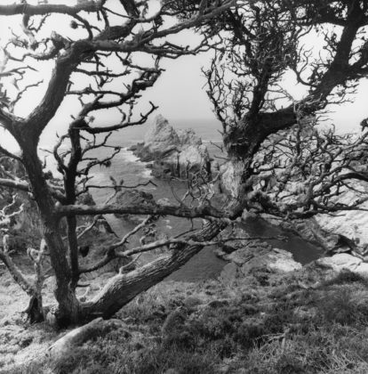 Lee Friedlander, Point Lobos State Natural Reserve, California, 2012