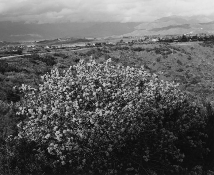 Redlands, California, 1983, gelatin-silver print