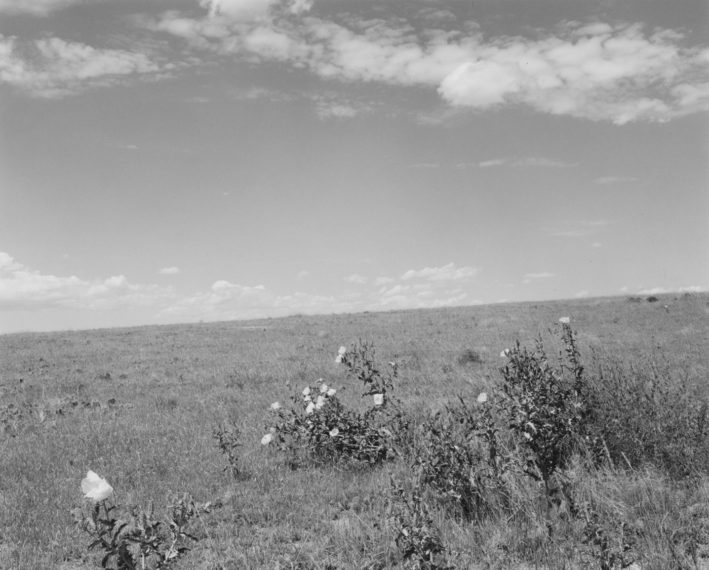 Pawnee National Grassland, Colorado, 1986, gelatin-silver print
