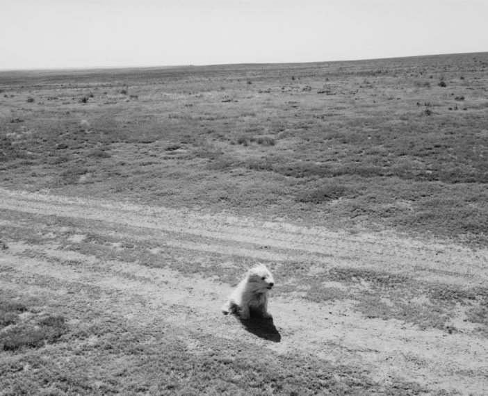 Sally, Pawnee National Grassland, Colorado, 1983, gelatin-silver print