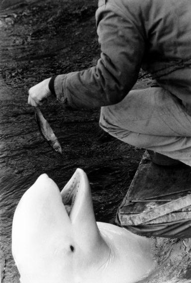 New York, 1963, gelatin-silver print