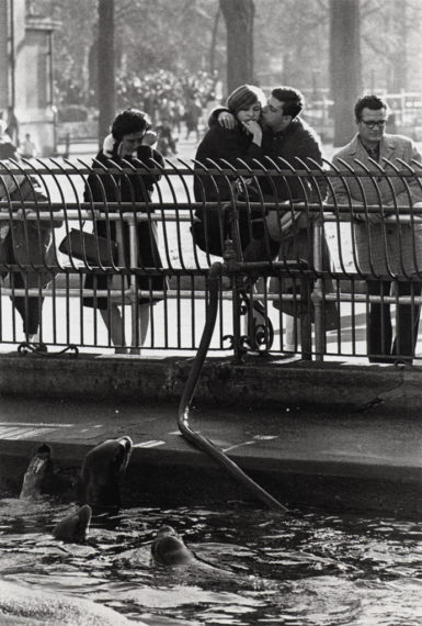Central Park Zoo, New York, ca. 1963, gelatin-silver print