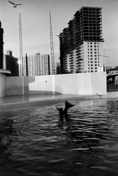 Aquarium at Coney Island, 1962, gelatin-silver print