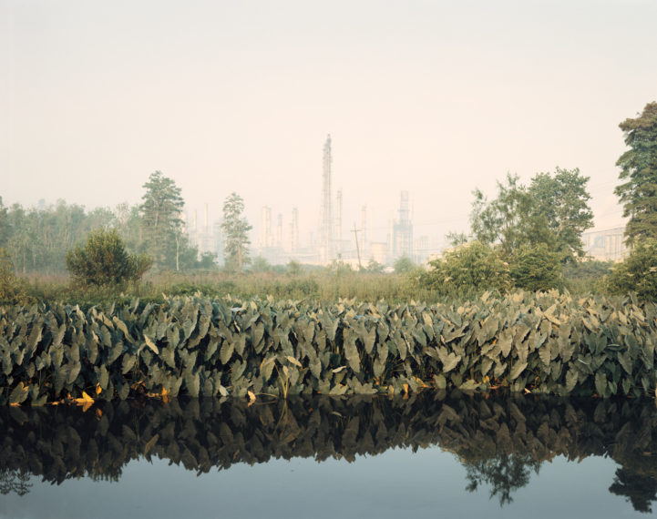 Roadside Vegetation and Orion Refining Corporation, Good Hope, Louisiana
