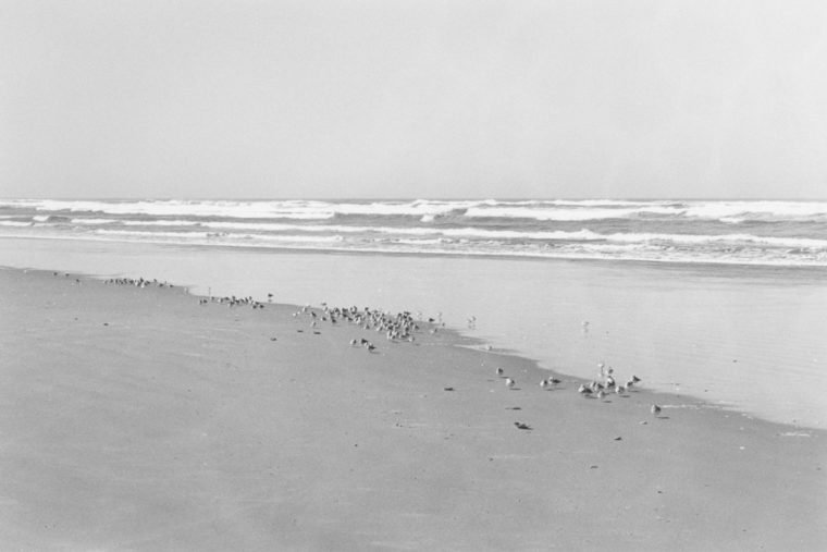 North Beach Peninsula, Pacific County, Washington, 2008, gelatin-silver print