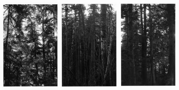 Untitled, 2011-12, three gelatin-silver prints