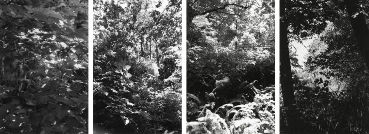 Untitled, 2008-11, four gelatin-silver prints
