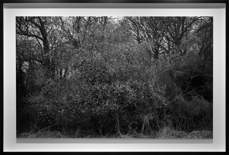 A roadside attraction, 2013, gelatin-silver contact print