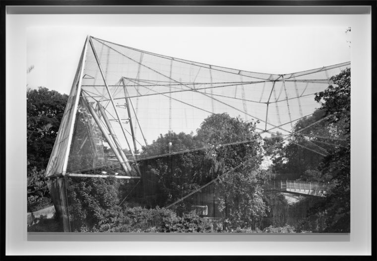Aviary, 2013, gelatin-silver contact print