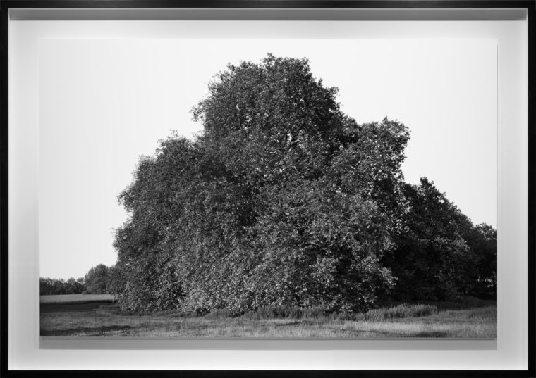 Looking away from Lacock, 2013, gelatin-silver contact print