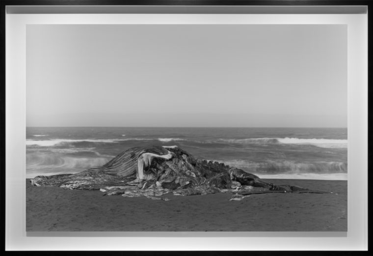 Whale, Pacifica, 2015, gelatin-silver contact print