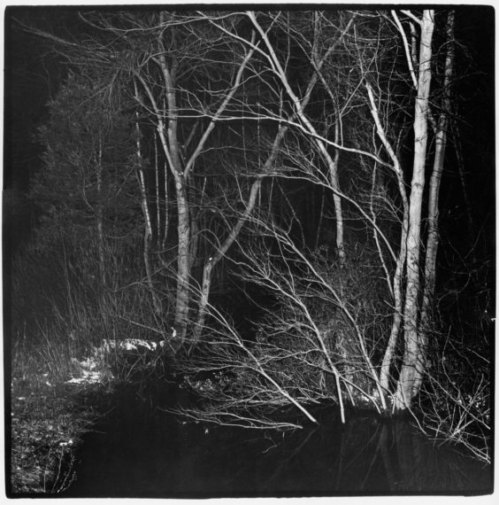 Trees with Flash, New Jersey