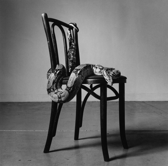 Skippy on a Chair, 1985, gelatin-silver print
