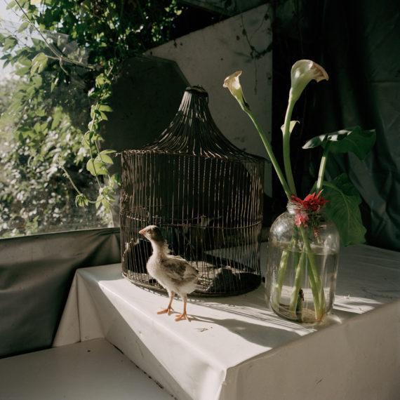 Untitled 51, Bogotá, 2003