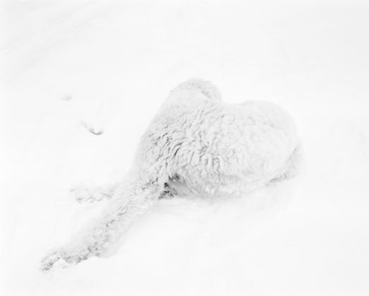Dog In Snow, 2010/2014, pigment print