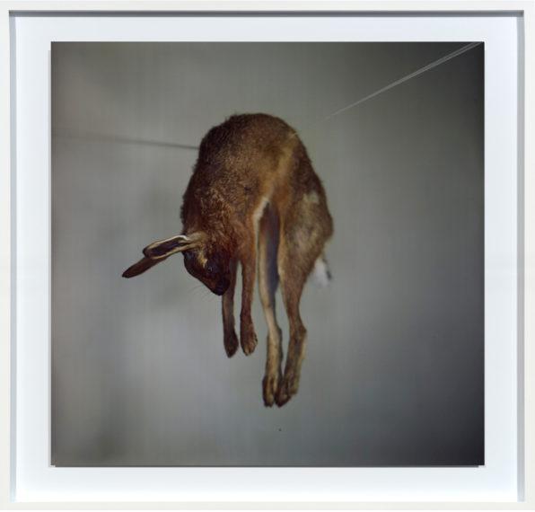 Hare 2, 2012
