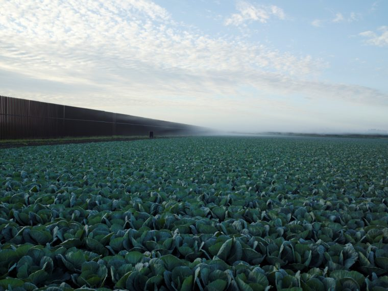Cabbage Crop Near Brownsville, Texas, 2015, pigment print