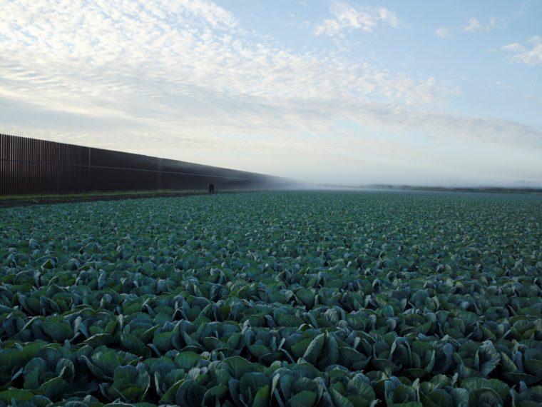 Cabbage Crop Near Brownsville, Texas, 2015, pigment print