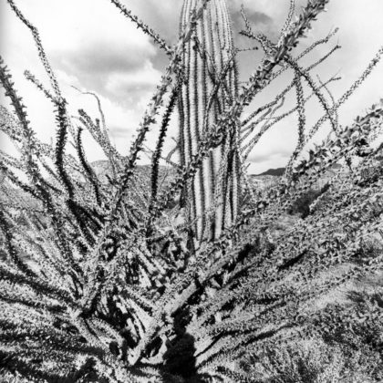 Lee Friedlander, Sonoran Desert, Arizona, 1995