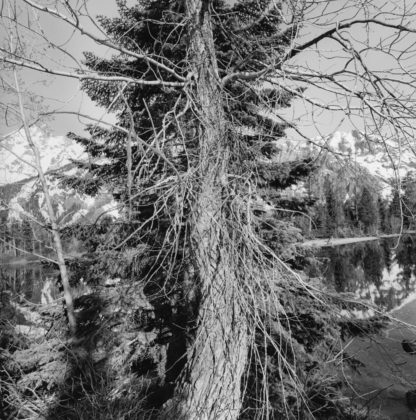 Lee Friedlander, Grand Teton National Park, Wyoming, 2009