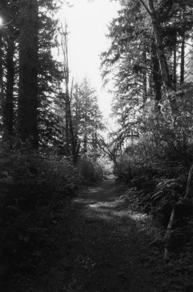 An Old Forest Road, 2012, gelatin-silver print